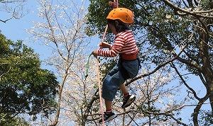 ツリーイング~木に登ろう!~ @ キャンプinn海山内 | 北牟婁郡 | 三重県 | 日本