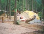 林間オートサイト ハンモック