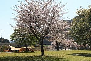お花見キャンプ! @ キャンプinn海山 木工アート広場