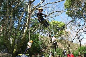 ツリーイング~木に登ろう!~ @ キャンプinn海山内   北牟婁郡   三重県   日本