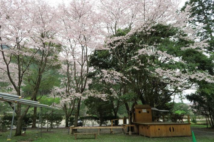 花見・桜スモーク @ キャンプinn海山 木工アート広場